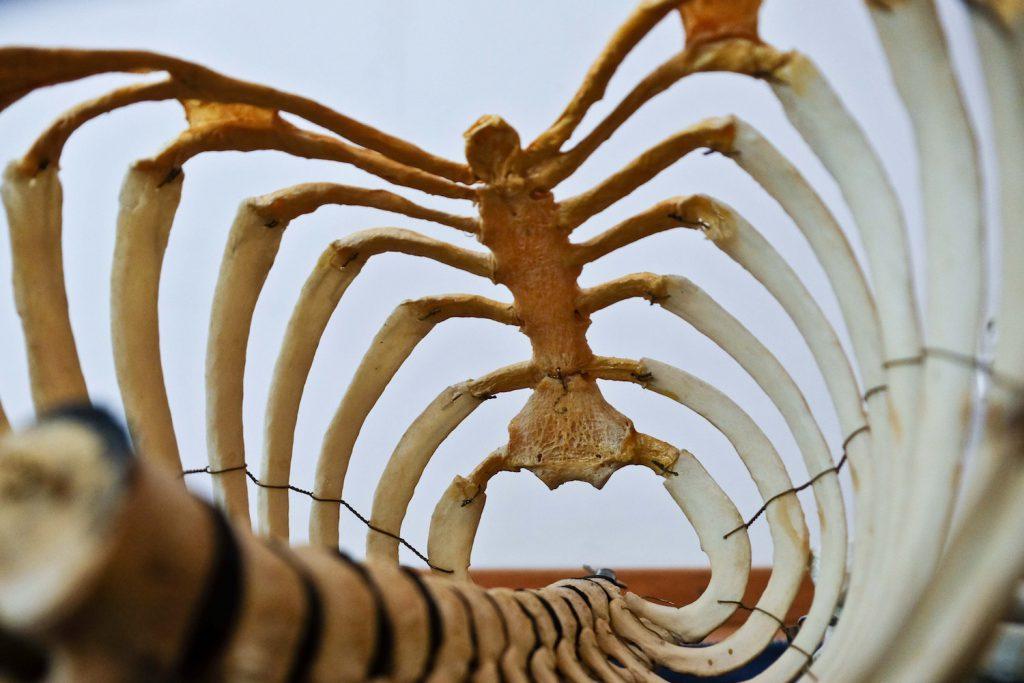 decorative image of spine