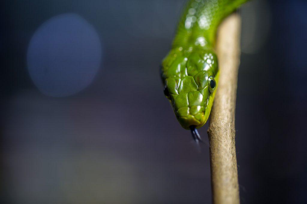 deco image: snake on a stick